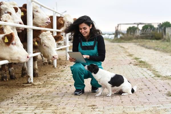 Farmer using IoT wearable technology for livestock management