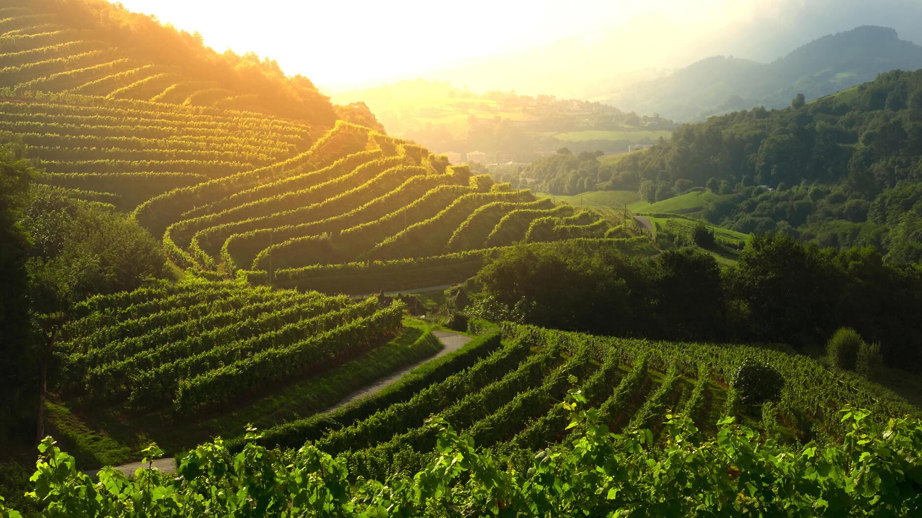 agriculural-landscape-sunset